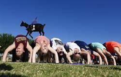 與羊咩咩共瑜珈 美掀健身新風潮