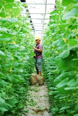 農業技術服務團開進嘉義太保 選出30名「農業師傅」