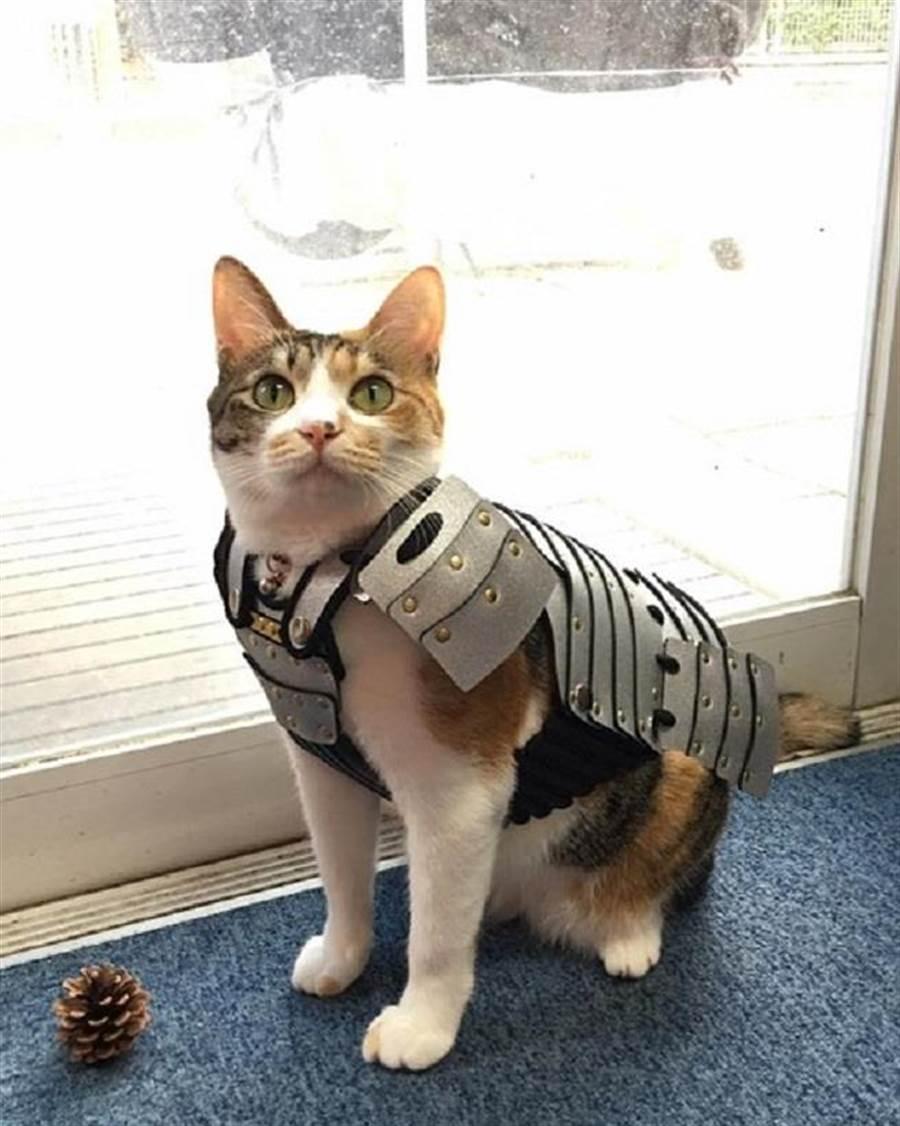 穿上銀色鎧甲的武士貓。(圖/Samurai Age官網)