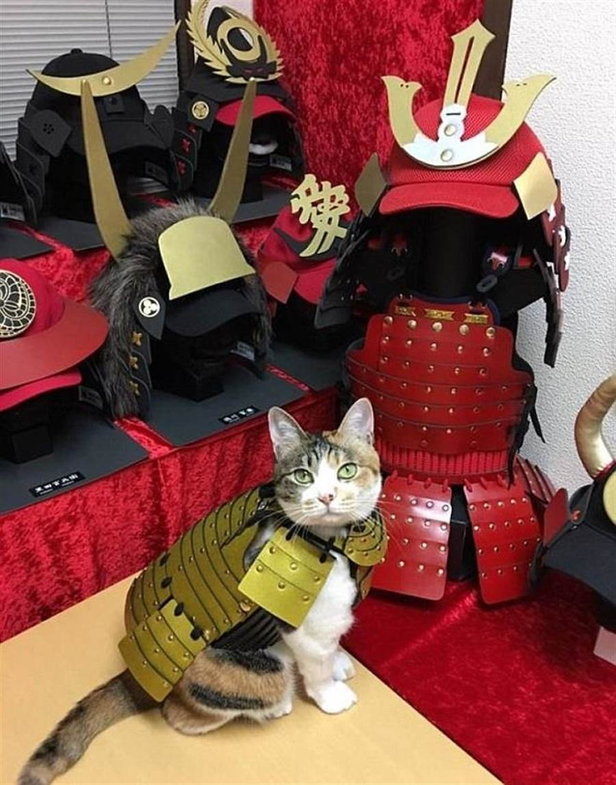 寵物武士系列也有推出武將頭盔。(圖/Samurai Age官網)