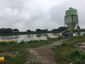 吳郭魚湖泊病毒 桃園市再傳2魚池感染