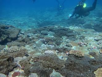 蘭嶼珊瑚礁調查 首見蝕骨海棉