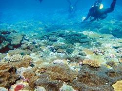 蘭嶼珊瑚礁 驚見蝕骨海綿