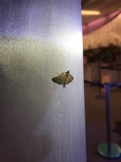 豬哥亮又回來了 靈堂出現「土豪金」飛蛾
