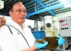 水試所突破比目魚養、繁殖技術 首度在台灣自然產卵