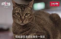 樂公益 ‧ 角落動物園》雅風音樂貓咪中途之家的Mr.卡卡