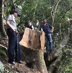 緝捕山老鼠 破獲百年牛樟木盜伐案
