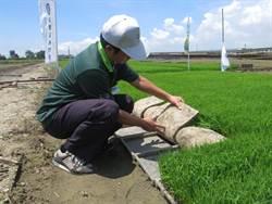 水稻專用育苗介質 嘉縣農民省力兼降低汙染