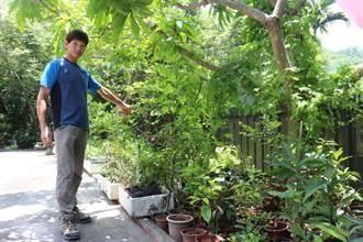 台東林管處與竹湖山居合作 要把殼斗科植物種回來