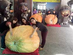 南瓜巨嬰吸睛 遊客搶合照頻問:這是真的嗎?