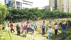 菜園變花園!中市森林農夫學院推蔬菜美學