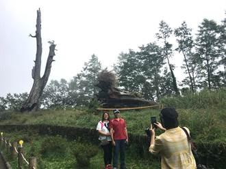 塔塔加夫妻樹倒木 未來原地殘跡展示