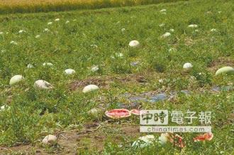 6月豪雨農損救助 開放申請