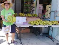搭605觀光公車遊農場 免費吃屏東香蕉