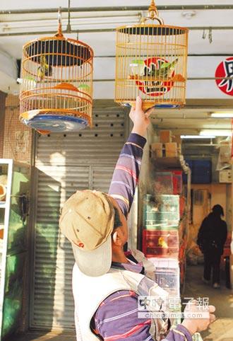 爭鳥權 5千人連署帶寵物鳥上大眾運輸