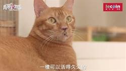 《樂公益 ‧ 角落動物園》不傳人不傳狗的貓愛滋Mr.呼嚕