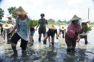月薪三萬召募青農下田 平均三年才會出師