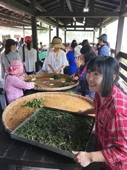 體驗紅茶與台灣第一生態 澀水社區逍遙遊