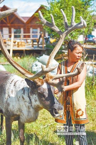 內蒙鄂溫克族 靠馴鹿旅遊生財