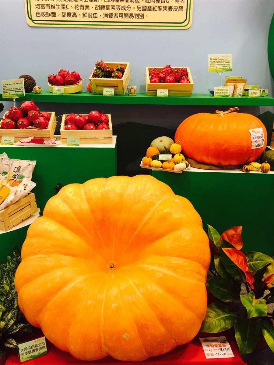 除了料理,食材也是必看重點,新北市淡水區農會提供的大南瓜足足有462台斤。(圖/林承彥)