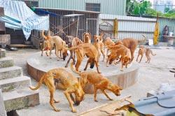 動物收容量爆滿 第一線壓力大