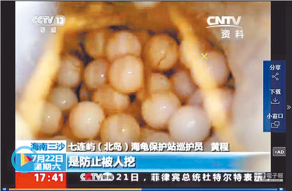 三沙北島海龜所產的海龜蛋。(取自央視截圖)