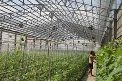 8月農閒沒工上 台南:派工率達6成