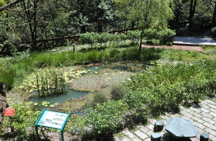 八仙山森林遊樂區位於中海拔山區,擁有獨特的地理環境及季節氣候,園區內十文溪及佳保溪水豐沛,讓悶熱的暑假變得沁涼舒適。(陳世宗翻攝)