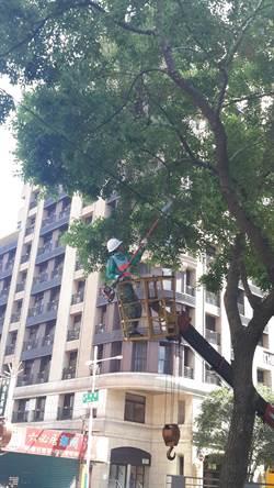 颱風尼莎來襲 新北市路樹扶正搶災不打烊
