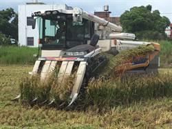 滲眉埤附近農地銅超標 預防性剷除5公頃稻米