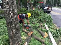 尼莎強陣風侵襲 北市1500餘株樹木傾倒