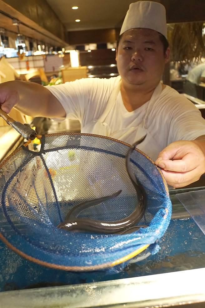 /台中「大江戶町鰻屋」的燒鰻,是以活的青口鰻魚,客人現點、廚師現殺現烤,口感與風味比冷凍鰻好。(圖/姚舜攝)