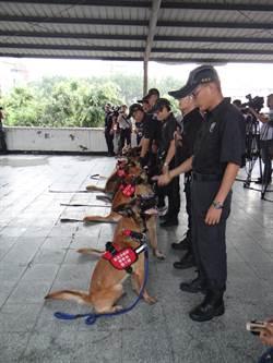警犬隊偵爆訓練成果驗收 小警犬趁機亮相