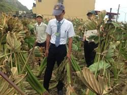 颱風襲台農作損 新北找專家幫農友