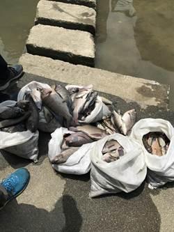 工地偷排廢水 樹林鹿角溪逾200條魚暴斃