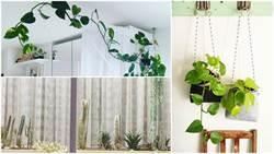 天然的室內清淨機!不一樣的裝飾,植物也可以讓居家很時尚!