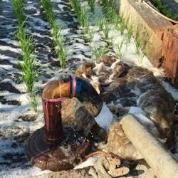 雲林縣府推廣豬糞尿沼液澆灌 農民觀望
