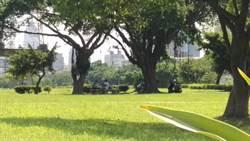 毒蟲河濱公園開毒趴 小隊長慢跑經過逮人