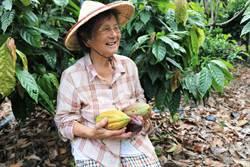 檳榔園轉作可可園  潮州86歲阿嬤跟上潮流重行銷