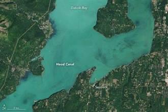 高溫肆虐 美國西雅圖海水由藍變綠