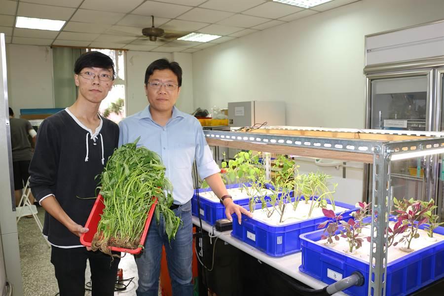 魚菜共生系統在廖健森實驗室的研究下成果非凡。(林雅惠翻攝)