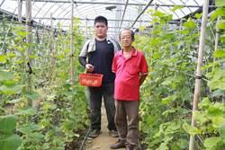 遠東科大「愛‧幸福」農場 溫室美濃瓜熟成開賣