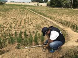 檢驗結果超標 桃環局公告汙染農地