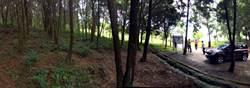 貼近泥土芳香 金龍山將闢自然工法森林步道