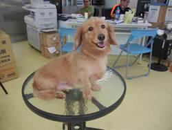 太愛狗?詢問領養流程 賊2天後潛入偷狗