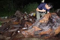 遭通緝竟大剌剌清洗珍貴林木 再添違法森林法罪責