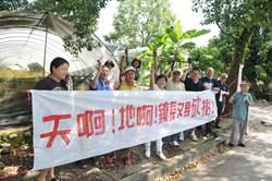 埔里鎮公所計畫移植60多棵樟樹 鎮民抗議