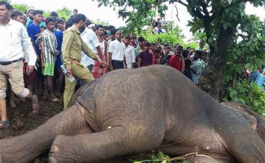 奪15條人命,流氓大象遭槍斃。(圖/ndtv)
