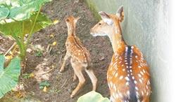 颱風夜誕生 動物園喜迎梅尼莎
