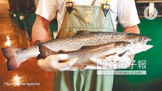 美全球首次售 民眾可啖基改鮭魚